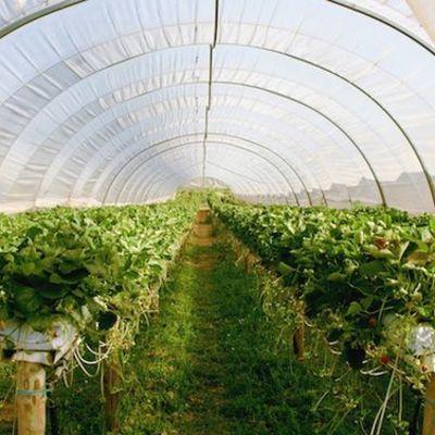 Costruire Serra Agricola Prezzo E Preventivi Online