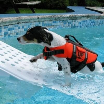 Scaletta piscina per animali