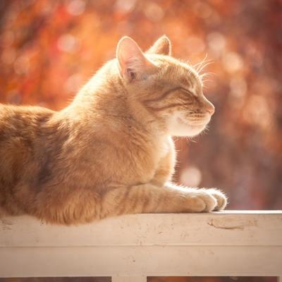 Installare una gattaiola su una porta finestra