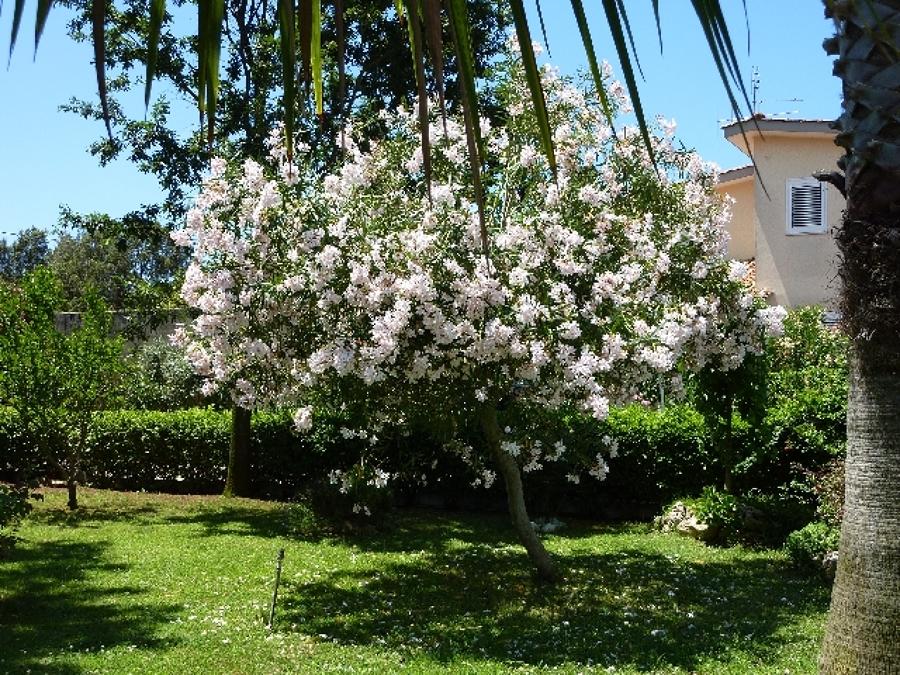 Preventivo piantare giardino online habitissimo for Piantare un giardino