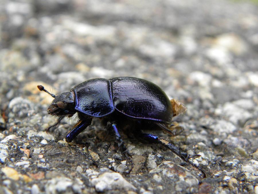 Lo scarafaggio