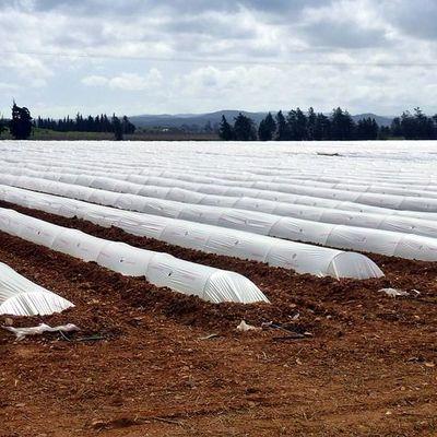 Ristrutturare Serra Agricola Prezzo E Preventivi Online