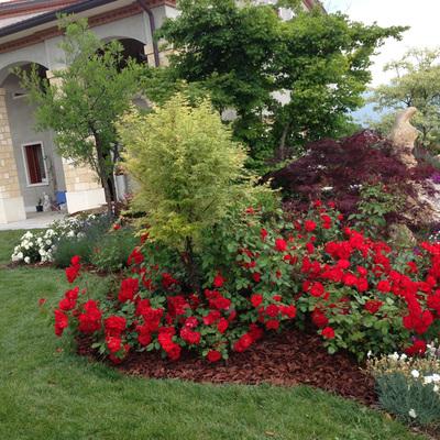Consigli e prezzi per progettare un giardino di casa for Immagine idee per giardini