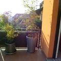 Angolo verde moderno su terrazzo