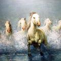 RUFFINI DECORAZIONI: cavalli  al galoppo
