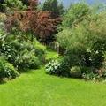 Cura del Verde-Giardinaggio