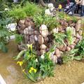 Giardino acquatico 2