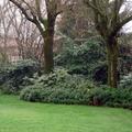 Giardino con bordure di sottobosco