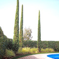 Giardino con piscina- Carobbio degli Angeli (BG)