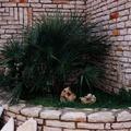 listelli Trani sp. cm. 4/6