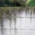 Muro con muschio e licheni