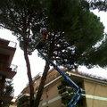 potatura alberi d'alto fusto