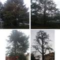 Potatura alberi (prima e dopo)