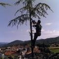 Tree climbing e abbattimento alberi ad alto fusto