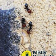 Distributori Mitsubishi - Mister Disinfesta