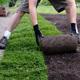 erba a tappetto