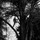 potature altofusti in treeclimbing