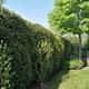 Rota Maurizio - Giardinaggio E Tree Climbing