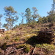 Pulizia di un terreno boschivo