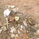 macerie e rifiuti