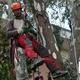 potatura eucalipto