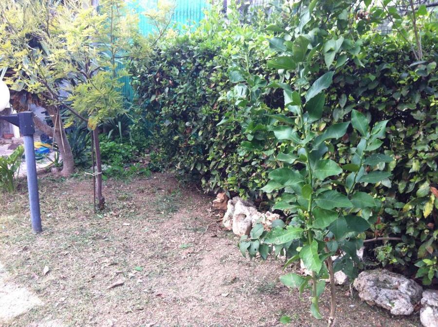 Foto: Manutenzione Giardini di Services Cleaning #280602 - Habitissimo