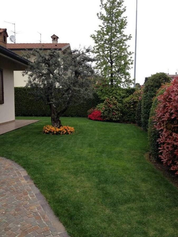 Foto giardino con siepe mista e ulivo di andrea morlotti for Aiuola con ulivo