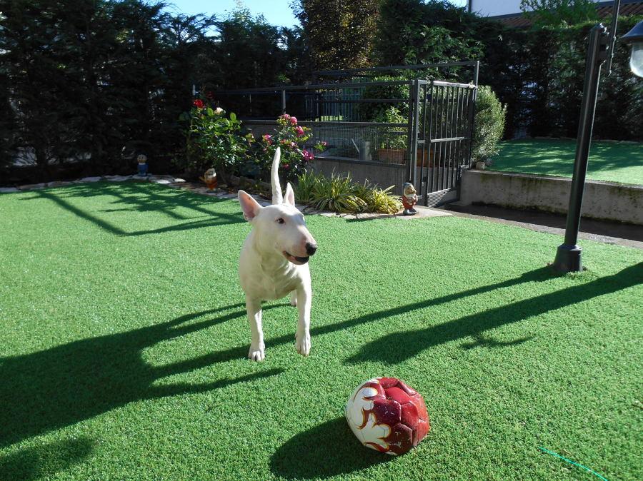 Foto giardino per cani di geogreen di cenedella giuseppe - Giardino per cani ...