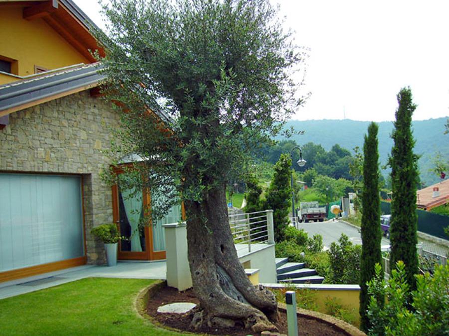 Giardino villa singola - Ponteranica (BG)