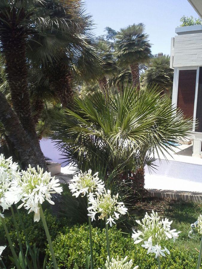 Foto manutenzione giardini di detto fatto srls 326109 for Manutenzione giardini