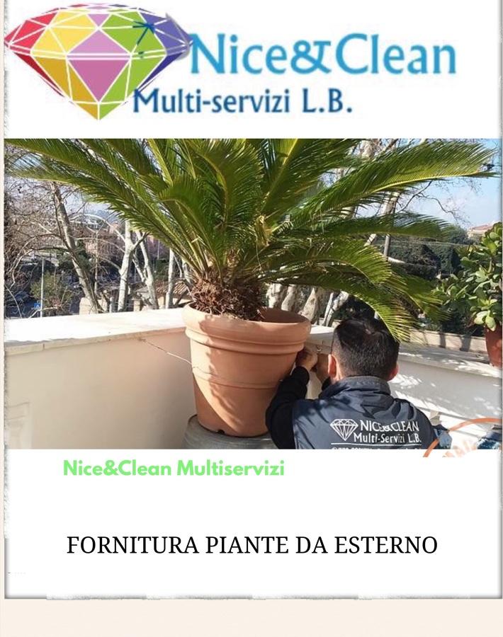 Fornitura piante da esterno