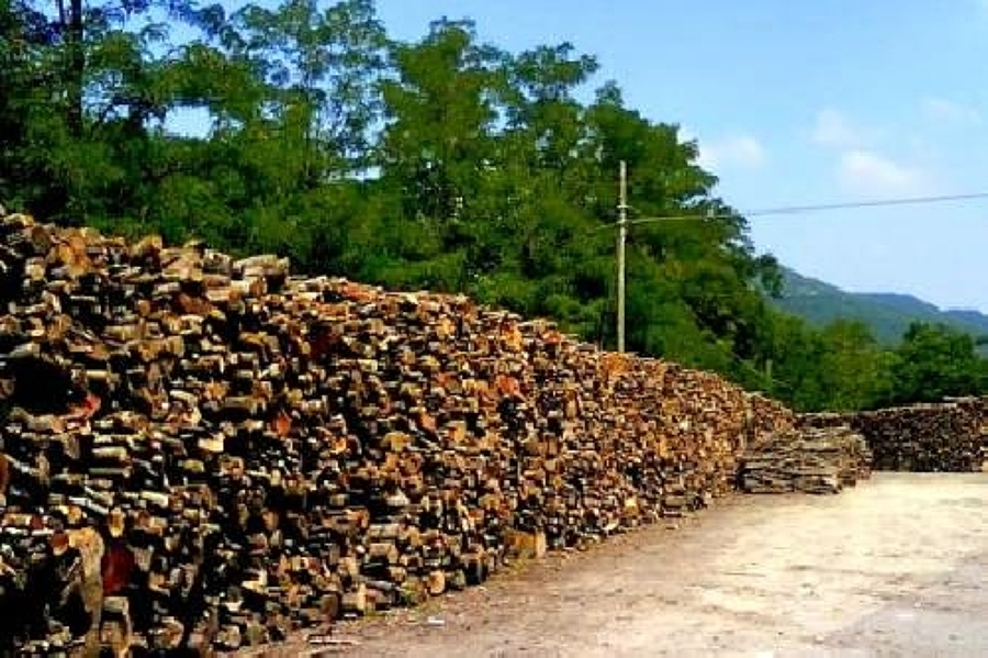 Foto legna da ardere di greentek 47044 habitissimo for Legna da ardere brianza
