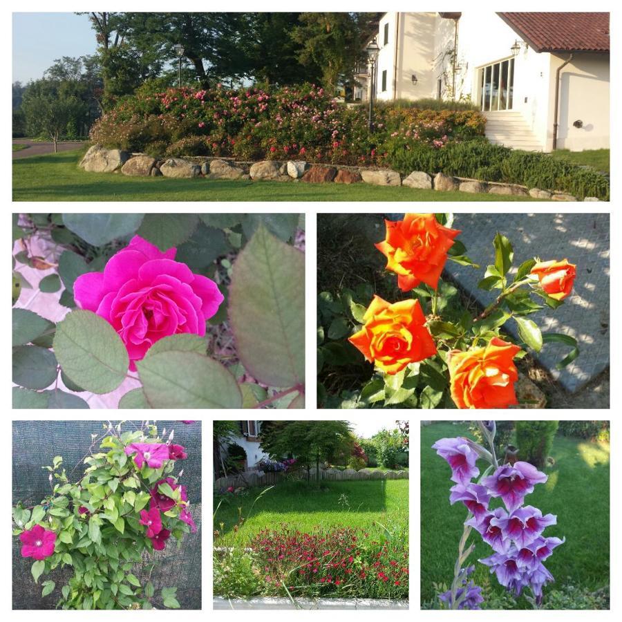 Foto manutenzione giardini di l 39 arte del verde di stefano for Manutenzione giardini