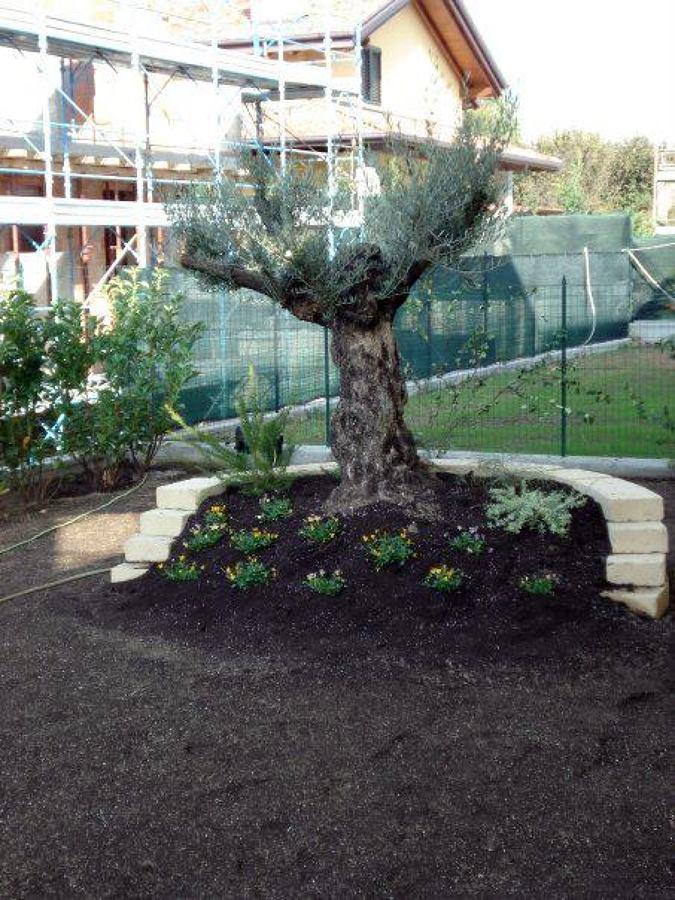 Particolare rialzamento giardino cardano