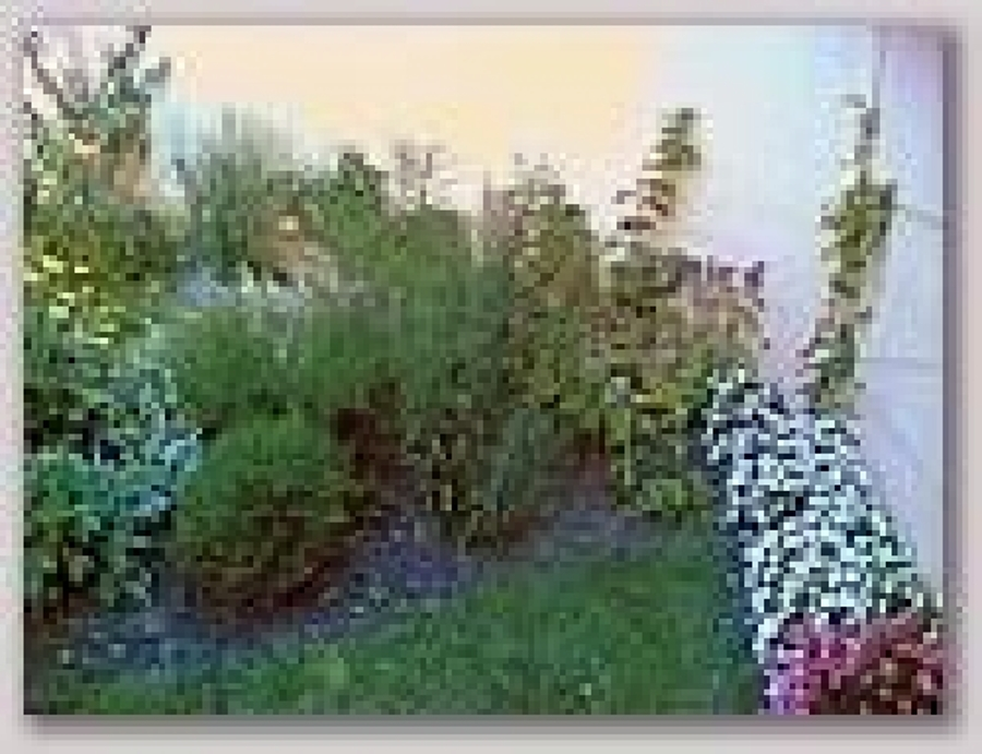 foto piante a cespuglio basse de pegaso puliservice