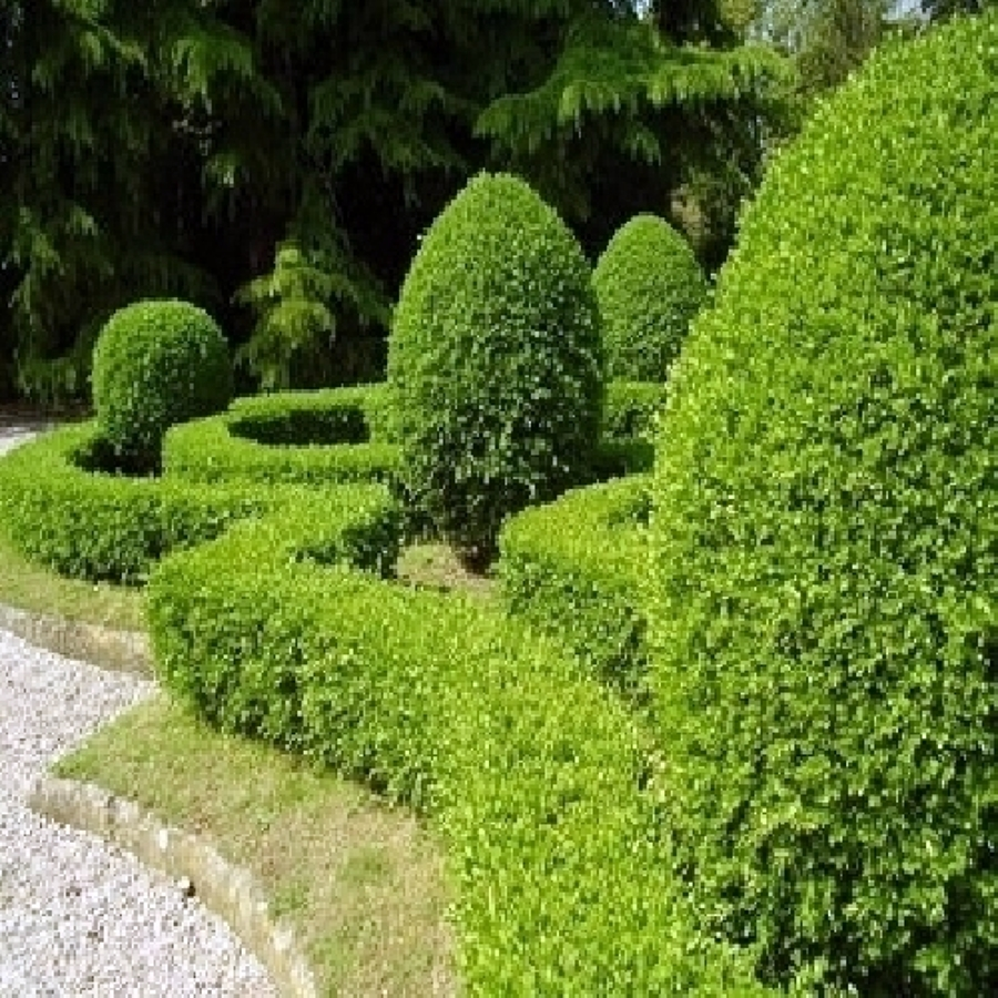 Foto potatura siepi e piante in giardino a roma e for Piante di giardino