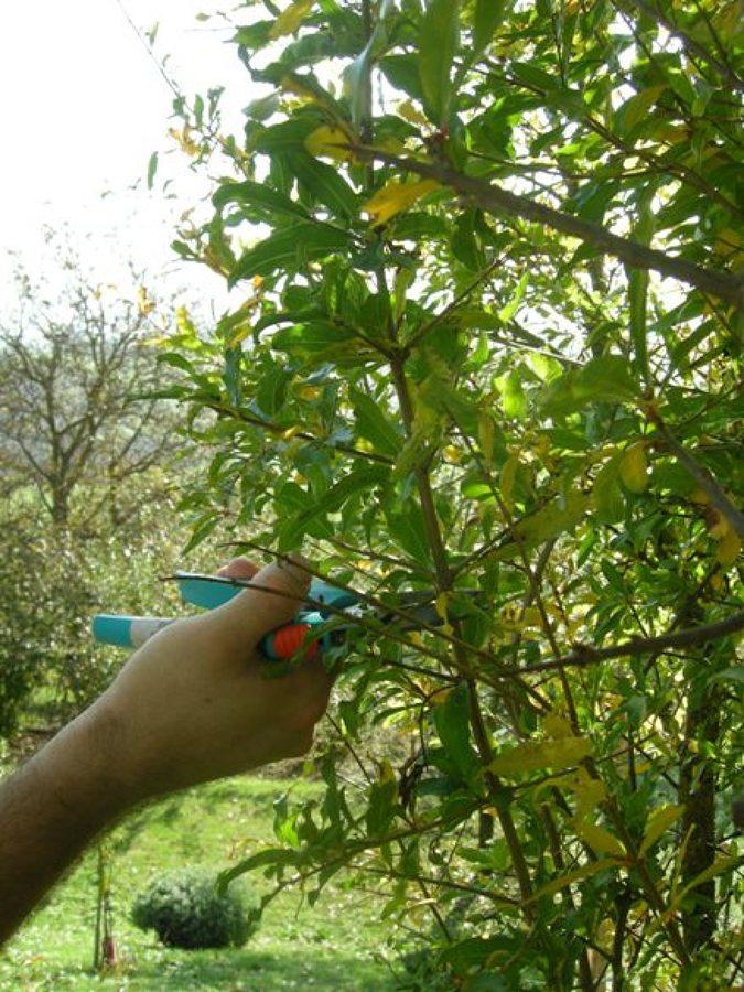 Foto potature alberi da frutto di s g garden 182781 for Alberi da frutto prezzi