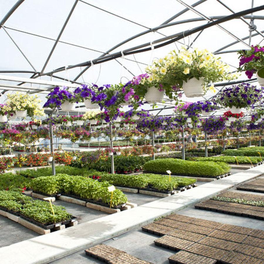 Foto vivaio piante da orto e giardino di sabina for Piante da vivaio