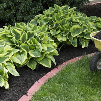 Manuntenzione giardini