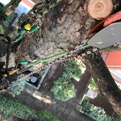Particolare di abbattimento albero ad alto fusto in Tree climbing