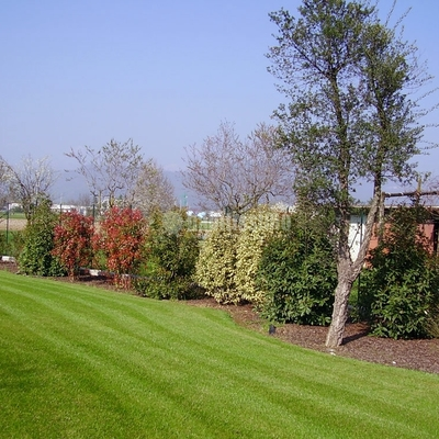 Giardinieri, trinciasarmenti, lavori forestali