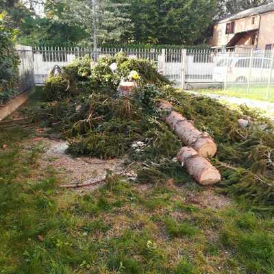 Abbattimento albero ad alto fusto