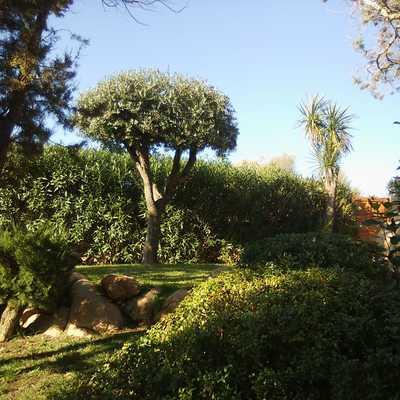 potatura ornamentale