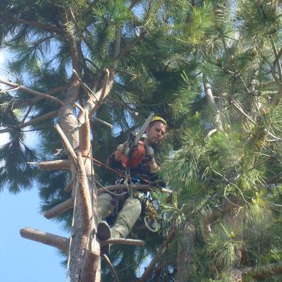 Abbattimento alberi 1