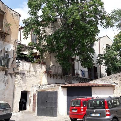 Abbattimento albero nel centro storico a Palermo_Prima
