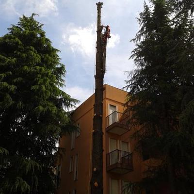 abbattimento controllato cedro in parco condominiale
