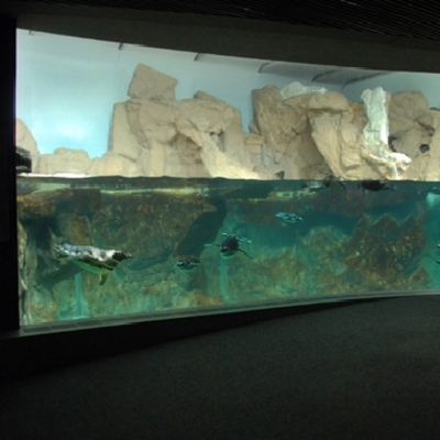 acquario di genova vasca pinguini