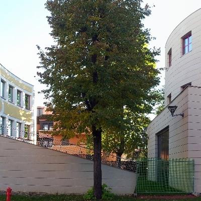 Complesso polifunzionale con scuola di Musica, Cesano Boscone