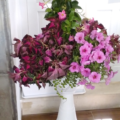Un giardino in un vaso