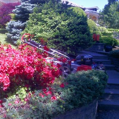 Manutenzionne Giardini